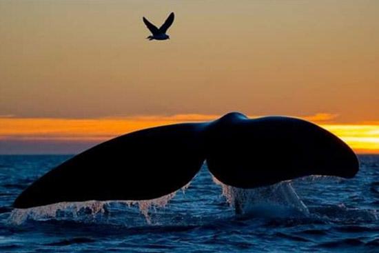 Le Balene nell' Oceano s.n.c